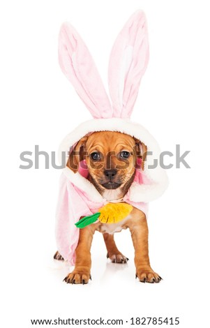 A cute little mixed breed puppy wearing a pink Easter bunny rabbit costume
