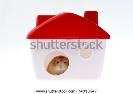 A cute little mouse, living in a small house there. - stock photo