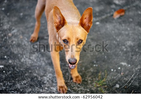A cute mixed breed mutt dog with golden blonde fur - stock photo