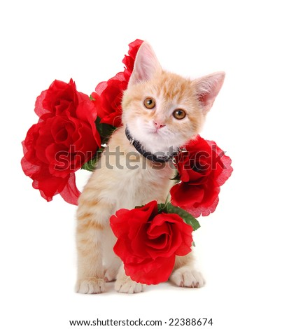A cute orange tabby kitten surrounded by roses. - stock photo
