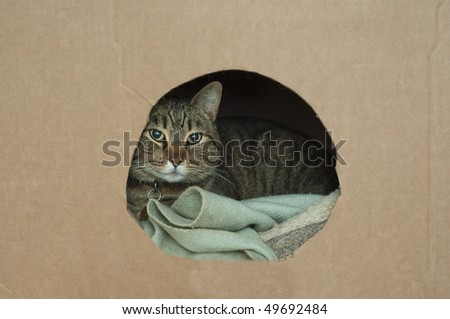 A cute pet cat lays down in his nest inside of a cardboard box with a hole in it wrapped up in a blanket - stock photo