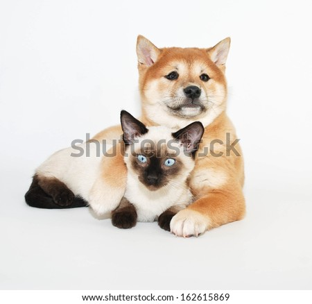 A cute puppy and kitten snuggled on a white background. - stock photo