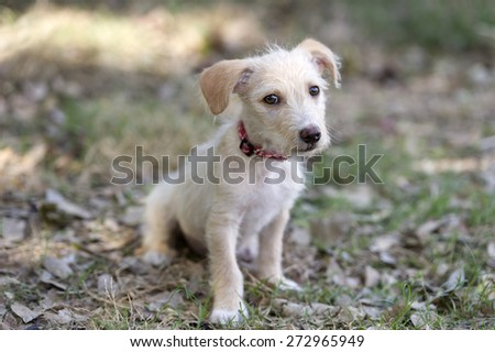 A cute puppy looks with an outdoors blurred backdrop. - stock photo