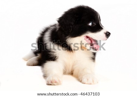 A cute puppy on white background