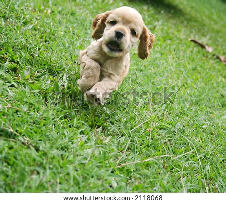 a cute puppy running - stock photo