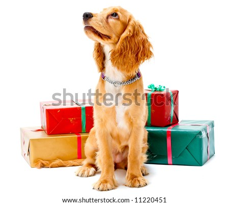 A cute puppy sitting with some wrapped gifts