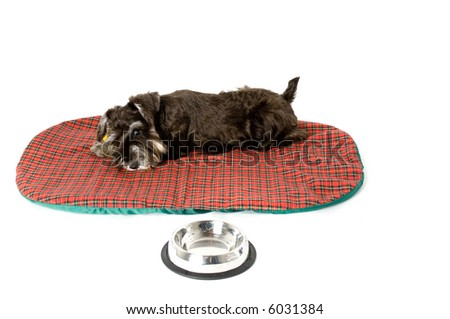 A cute puppy tired after playing - stock photo