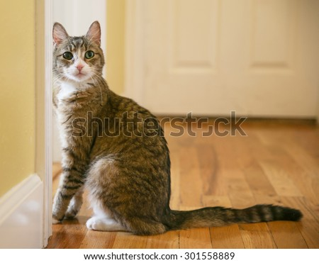 a cute small cat or kitten looking at the camera sitting in a hallway with natural light  - stock photo