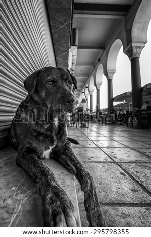 A cute stray dog relaxing in front of a closed store at Aristotelous square of Thessaloniki, in black and white. - stock photo