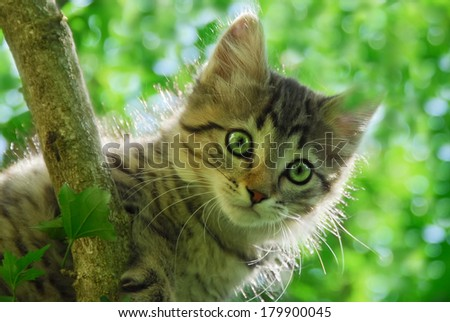 A cute tabby kitten is climbing in a tree, portrait