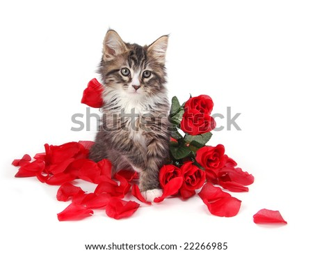 A cute tabby kitten surrounded by roses. - stock photo