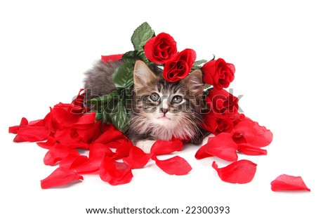 A cute tabby kitten surrounded by roses.