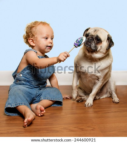 A cute toddler wearing jean overalls tries to share his lollipop with a pug puppy.  - stock photo