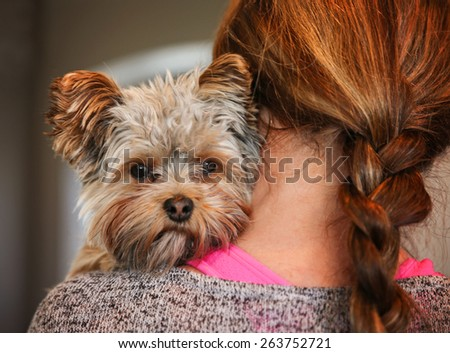 a cute yorkshire terrier peeking from around a woman  - stock photo