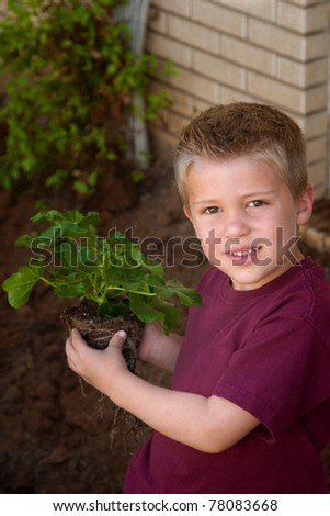 A cute young boy, in front of a home, holds a green plant with roots, ready to be planted in the garden - stock photo