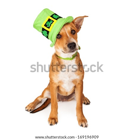 A cute young mixed breed puppy dog wearing a green collar and tall St. Patrick's Day Hat with clovers on it - stock photo
