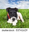 a Cute young pure bred fox terrier dog lying on grass - stock photo