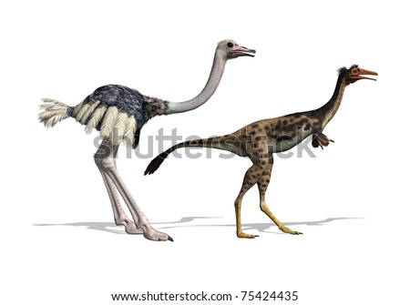A 3D render that compares the similarities in body structure between an ostrich and a mononykus dinosaur. - stock photo