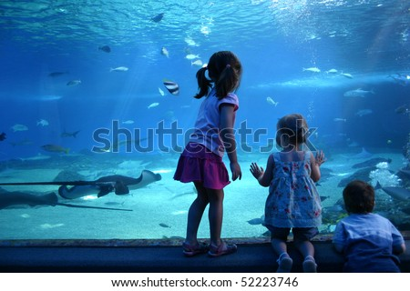 A Day at the Maui Aquarium - stock photo