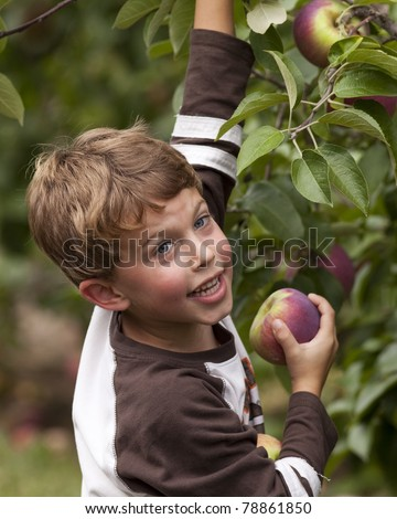 A day of apple picking in the fall at a local orchard. - stock photo