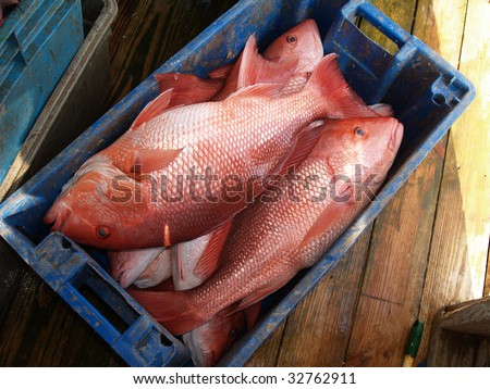 how to catch red snapper from shore