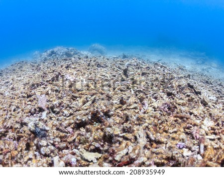 A dead, bleached coral reef.  Global Warming, rising sea temperatures and overfishing are having a huge effect on the world's coral reef systems - stock photo