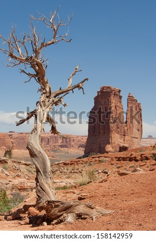 A dead juniper tree in Arches National park still standing regardless of the elements - stock photo