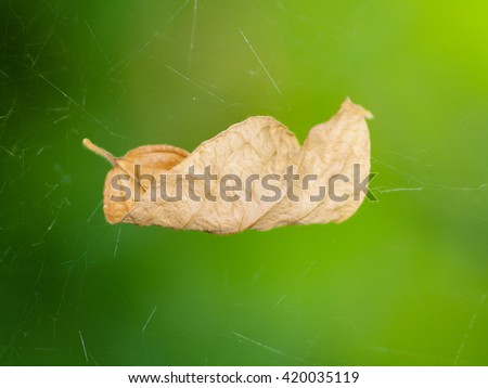 A dead leaf on mesh of spider. Shallow DOF - stock photo