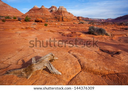 A dead log on desert area in North Coyote Butte, Arizona