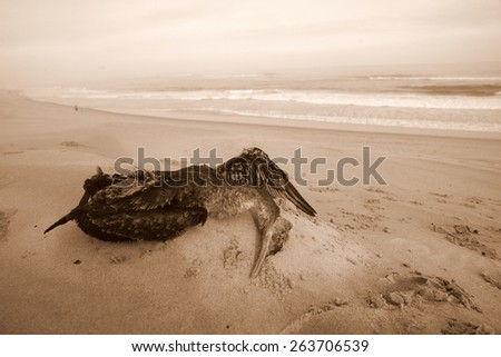 A dead sea bird / cormorant on the beach in sepia tone. - stock photo