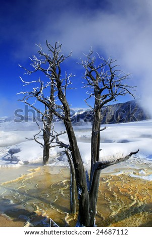 A dead tree in a hot pool at Yellowstone National Park - stock photo