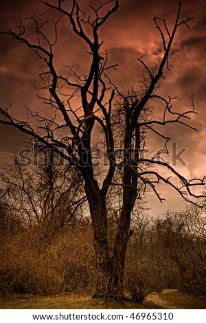 A Dead Tree In Hell - stock photo