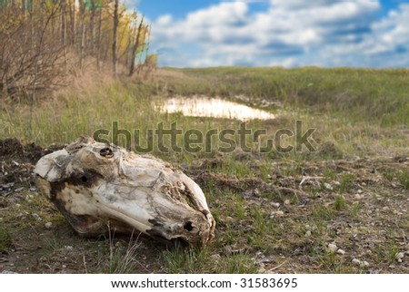 A decayed skull sitting in the dirt outside on a cloudy day