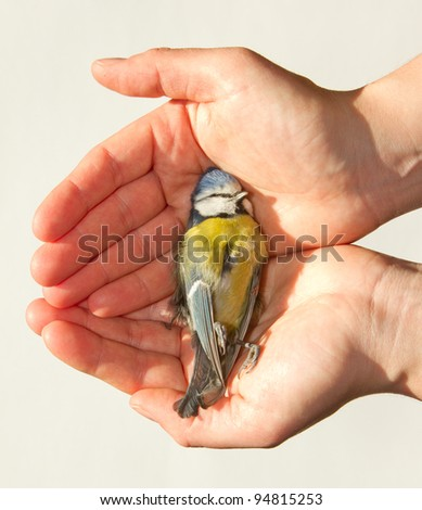 A deceased blue tit is being held in a woman's hand