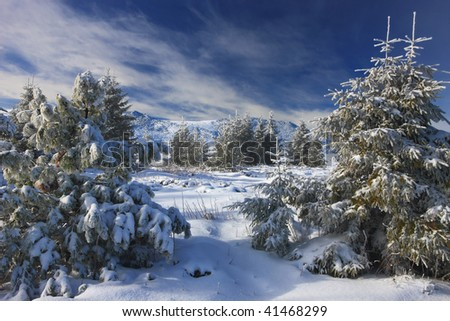 a deep and pretty winter view in beauty snowing forest