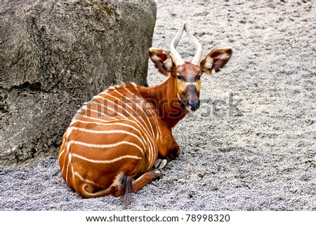 a deer rest on sand ground - stock photo