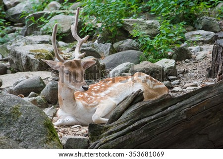 a deer sleeping in a forest - stock photo