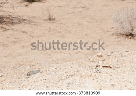 A desert horned lizard (Phrynosoma platyrhinos) blends into the sand perfectly in the mojave desert.  Can you see the lizard towards the bottom right of the picture? - stock photo