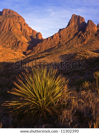 A desert plant and the Chisos Mountains in Big Bend National Park, Texas. - stock photo