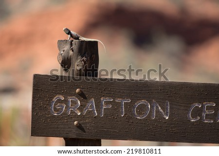 A Desert Spiny Lizard (Sceloporus magister) basks atop the Grafton Cemetary sign at the Grafton ghost town, nearby Zion National Park, Utah. - stock photo