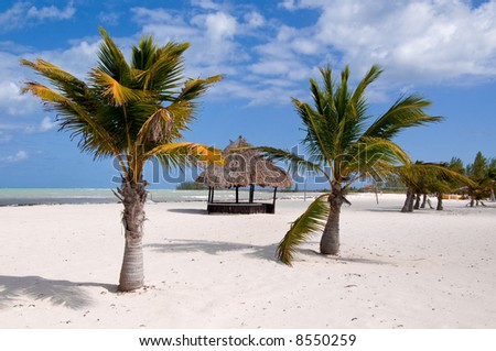 A deserted hut is surrounded by palm trees on a tropical island - stock photo