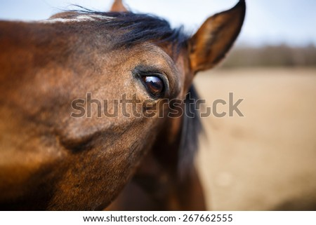 A detail of a horse eye at spring time - stock photo