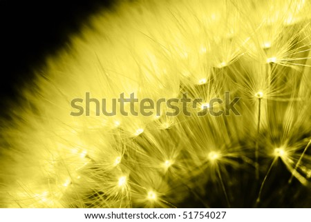A detail of dandelion in yellow light. - stock photo