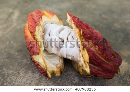 A detail view of a cut opened cocoa pod in Huayhuantillo village near Tingo Maria in Peru, 2011 - stock photo