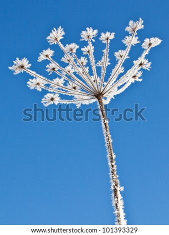 A detailed image of a frozen plant - stock photo