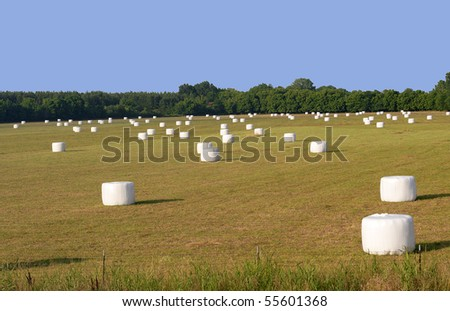 A Different Kind of Hayfield