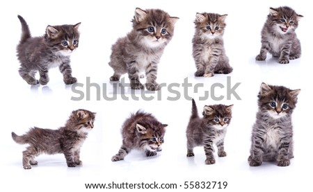 A different kitty on white isolated background