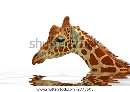 A digital composite of a sad giraffe submerged in water. A symbol of upcoming global warming problems.