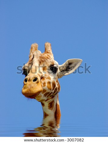 A digital composite of giraffe in water, symbolizing effects of global warming. - stock photo