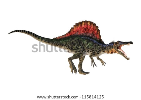 A digital render of a Spinosaurus dinosaur isolated on a white background.  He is stalking aggressively. This theropd dinosaur lived in areas of Africa during the Cretateous time period. - stock photo